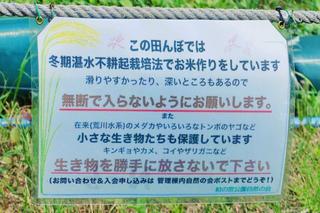 柏田んぼ7c.jpg